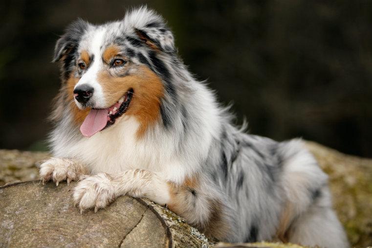 Aus der Praxis…: Mein Hund erbricht sich!