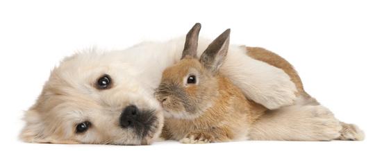 Ursachen für die Probleme deines Tiers