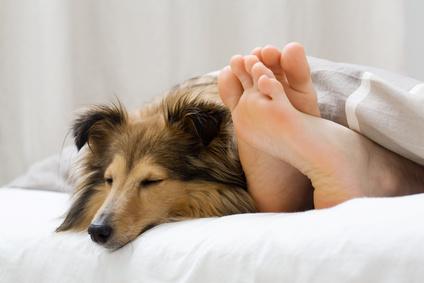 Naturheilpraxis für Mensch und Tier