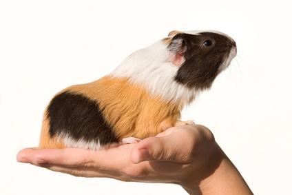 """Krankheiten und Probleme von Tieren können mit """"ihren"""" Menschen zu tun haben"""