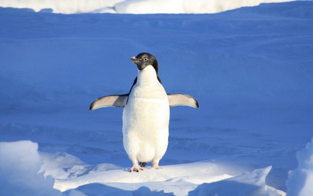 Das Pinguinprinzip - warum es für dein Leben wichtig ist, dass du dein Element findest