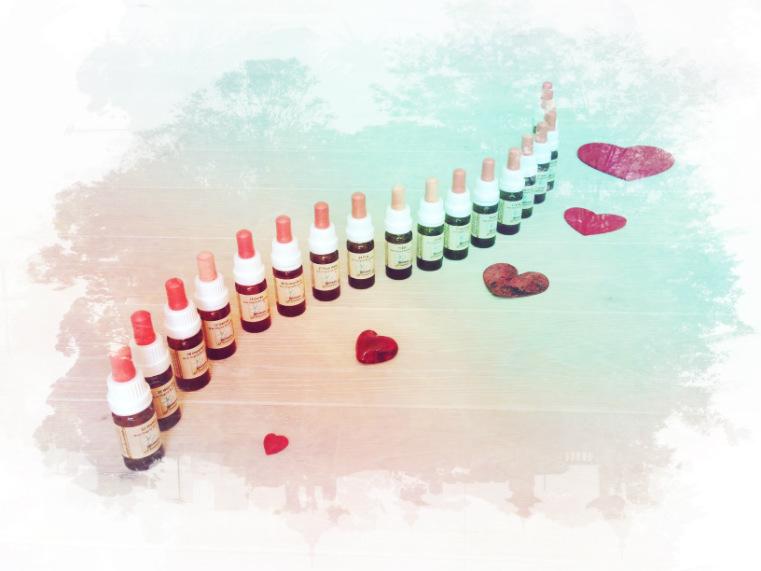 Bachblüten für deinen Herzensweg Teil 1