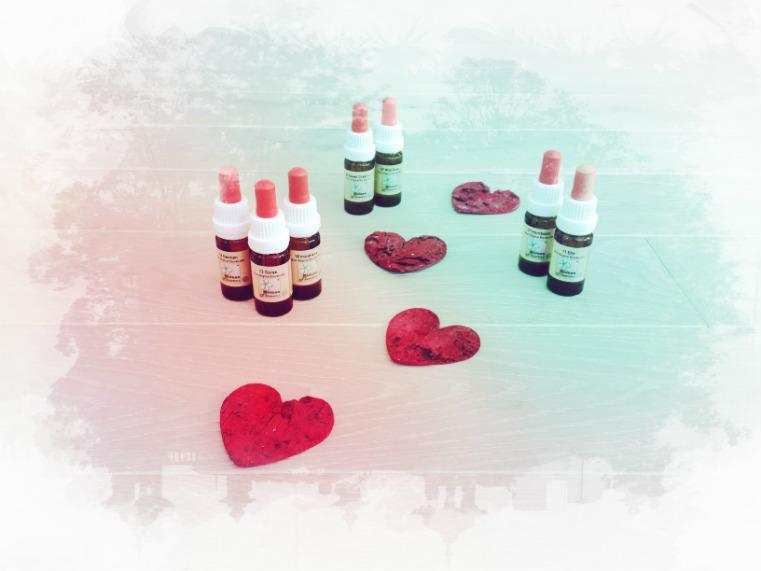 Bachblüten für deinen Herzensweg – Teil 4: Zuversicht, wenn du den Mut verlierst