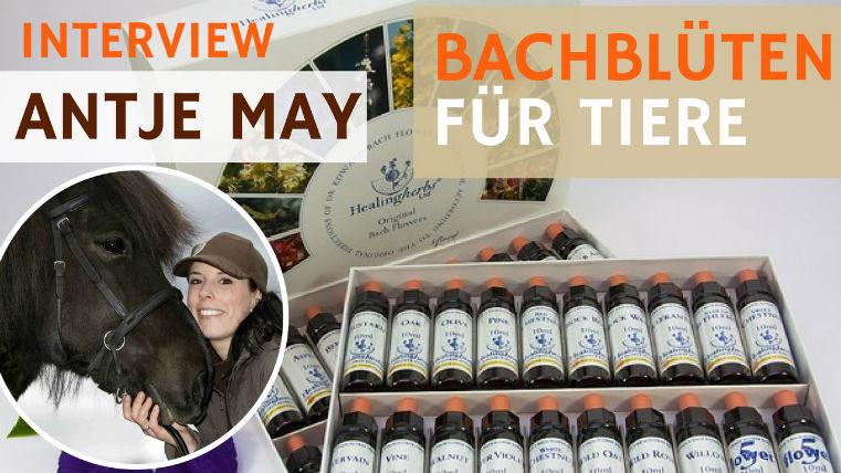 Bachblüten für Tiere – Podcast Interview mit Sonja Neuroth